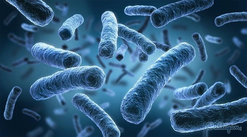 Virus y bacterias en el agua