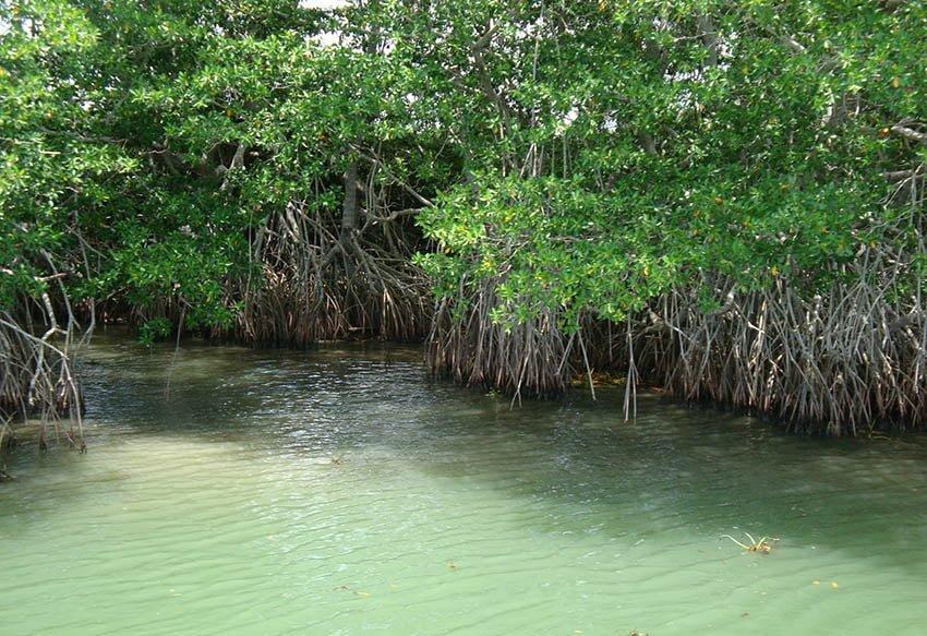 Pantanos característicos de agua salada.