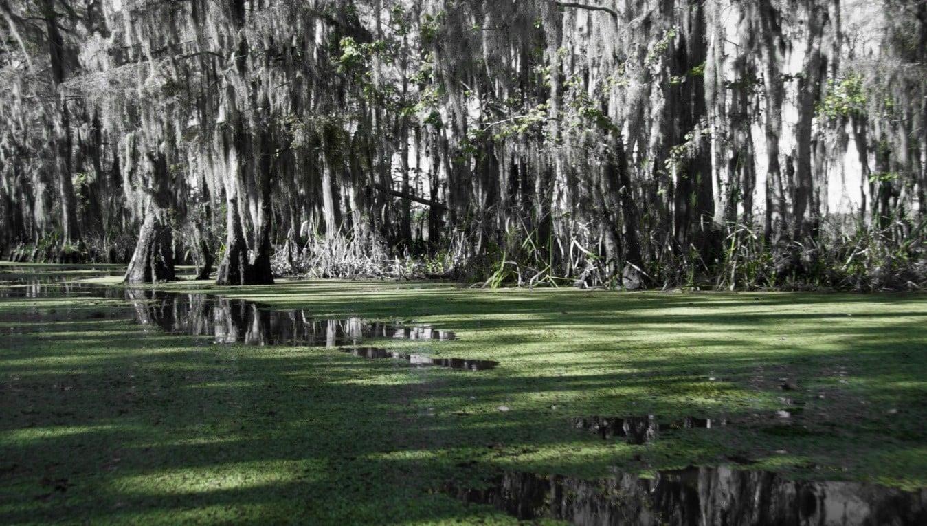 Ejemplo de Pantano asociado a ríos.