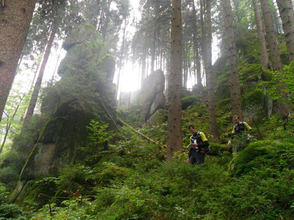 La vegetación aprovecha el carbono de la atmósfera para transformarlo en oxígeno y purificar el medio ambiente.
