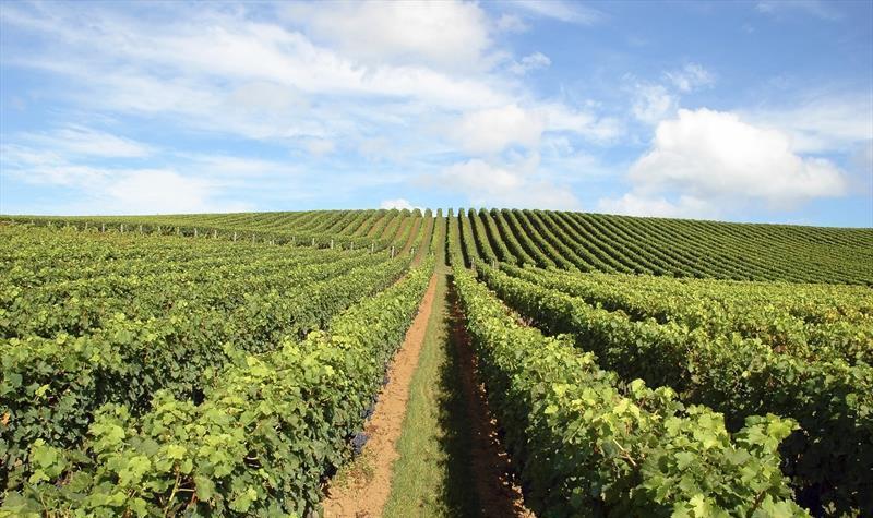La agricultura emplea la filtración para elaboración de insecticidas o para tratamiento de aguas.