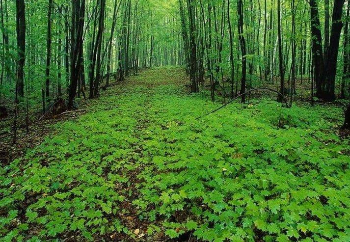 Las plantas mediante acciones simbióticas con Bacterias y organismos procariotas aprovechan el nitrógeno para su crecimiento y desarrollo.